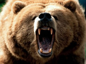 bearopenmouth